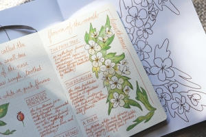 Hawthorn flower bullet journal